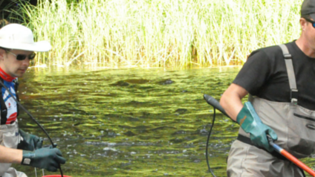 Swedish SME conducting biological studies of aquatic environments